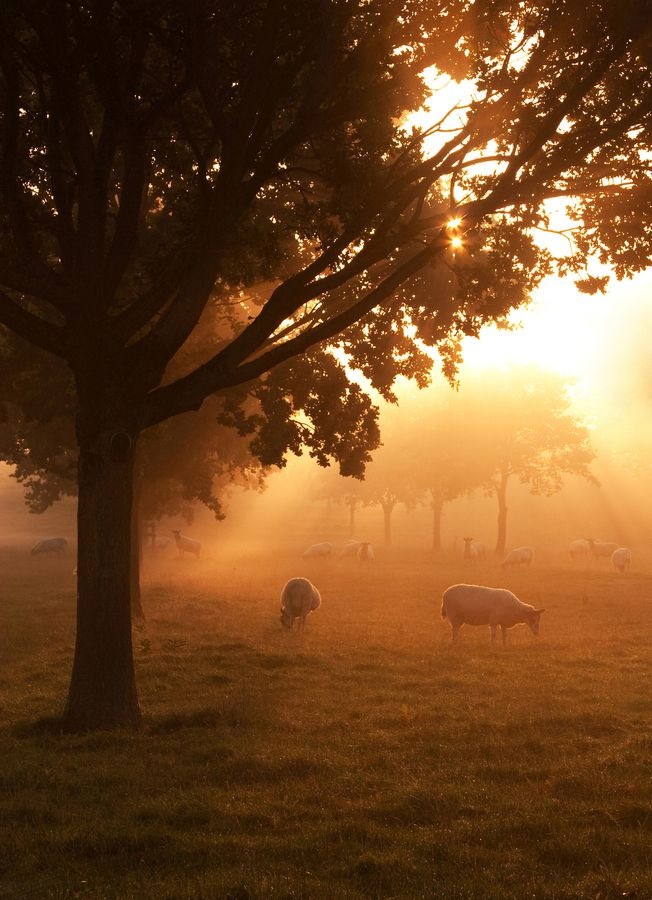 Autumn Sunrise - North Hamptonshire UK
