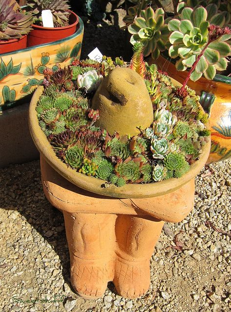 Sleepy ceramic mexican hat stuffed with different color sempervivum, echeveria and crassula.  http://www.sweetstuffssassysucculents.com/2011/10/succulent-extravaganza-in-castroville_06.html