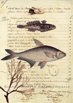 Fish Sea life print fish collage natural poster french vintage paper nature poster illustration collage art print 8x10. $9.90, via Etsy.