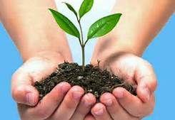Cuidando al ambiente