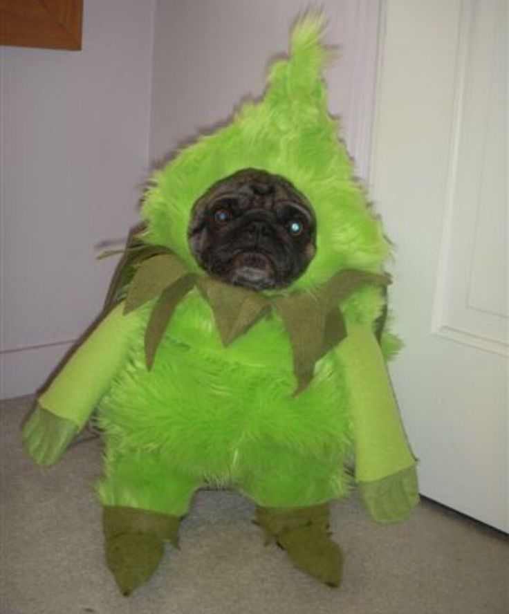Grinch Best Costume Ever For Dogs Grinch Dog Costume