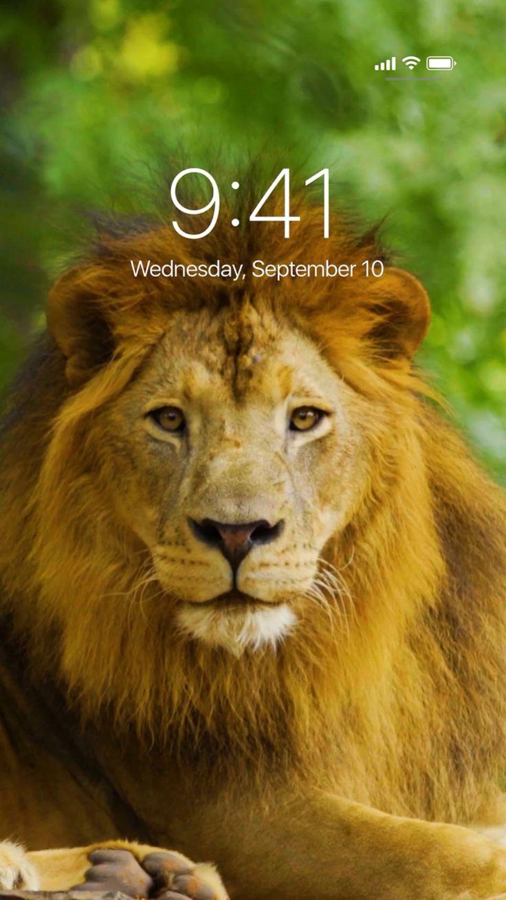 Lion 3d Live Wallpaper - Download Wallpapers