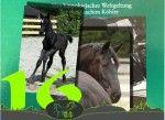Türchen 16 - Vom Fohlen zum Pferd