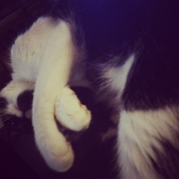Day 18: #SomethingIBought (Pep #cat two years ago) #janphotoaday