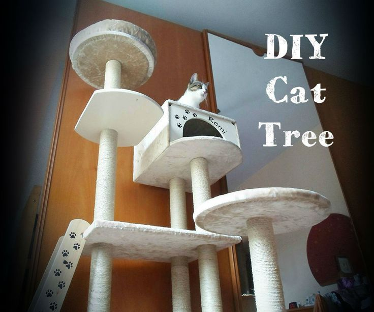 Big cat trees are beautiful but really expensive. One day I saw this huge cat tree and the more I looked at it, the more I convinced myself that I ...