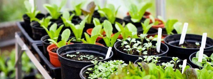 huerto urbano, semillas ecológicas, semillas híbridas, semillas transgénicas | Urbanicultor.es