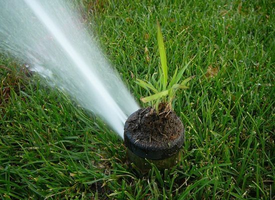 8 Ways to Save Water (Without Killing Your Yard): Organic Gardening, Garden Watering, Garden Diy, Helpful Tips, Water Savers, Kitchen Garden, Helpful Gardening