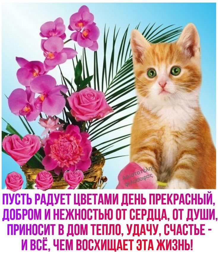 Открытки с котиками доброго утра и хорошего
