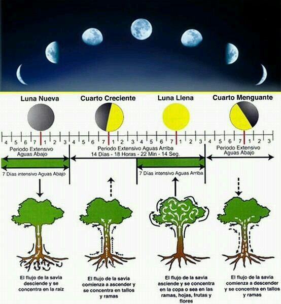 Calendário da Lua e a relação com crescimento das plantas...