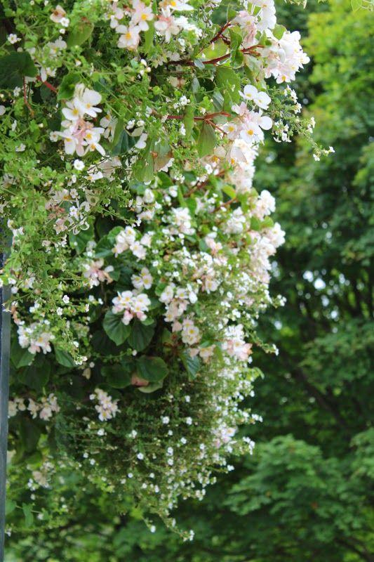 EN SOMMERDUET - A nice plant- combination