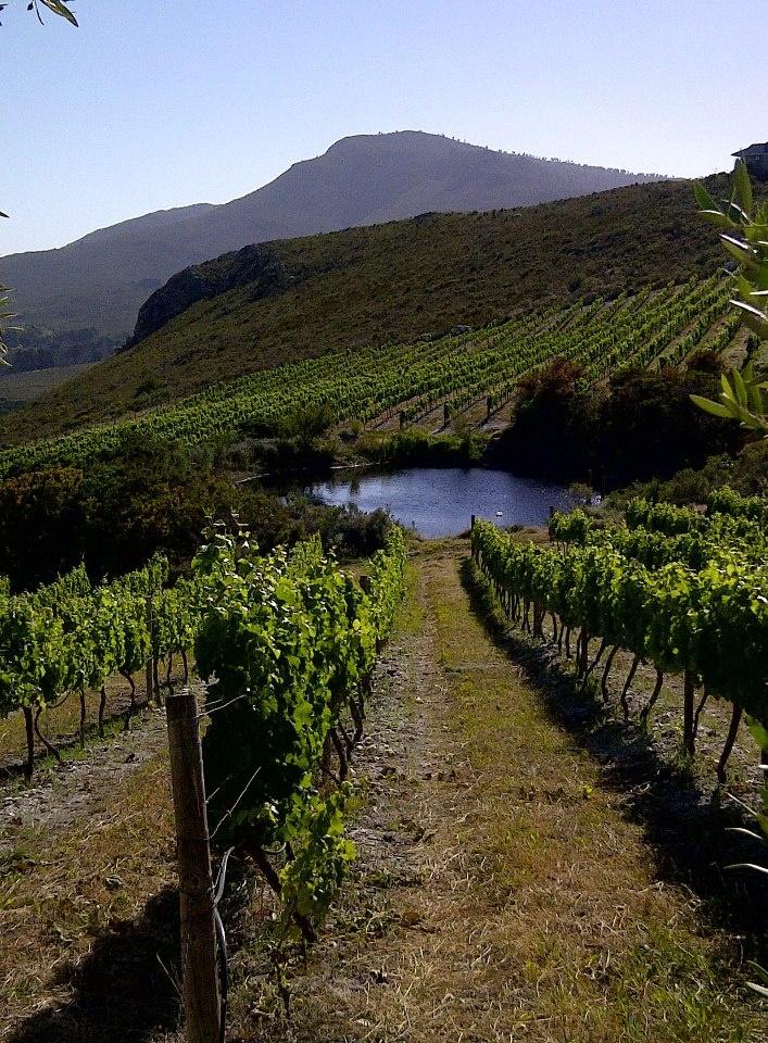 Warm summer afternoons in the Hemel-en-Aarde Valley #SouthAfrica