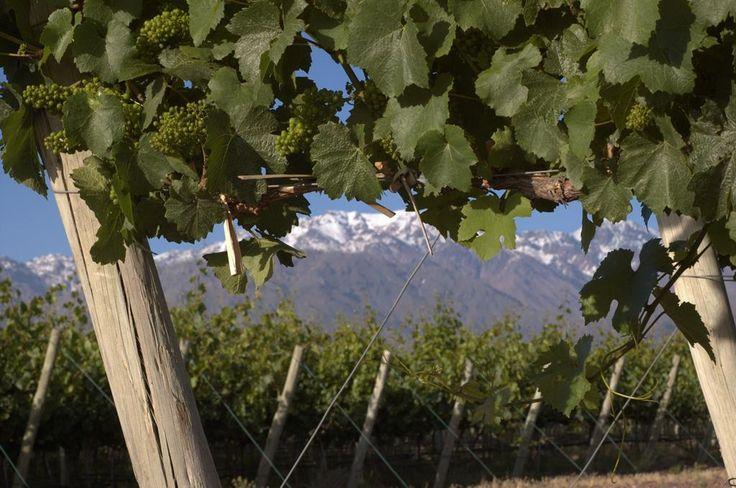 #Mendoza #TierraDeVinos   #ArgentinaEsTuMundo #wine #vino #turismo #Argentina  Más info en http://www.facebook.com/viajaportupais