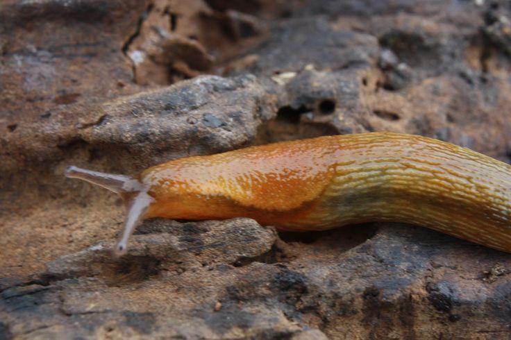 Slug Mucus Used to Create Super-strong Glue That Stops Internal Bleeding