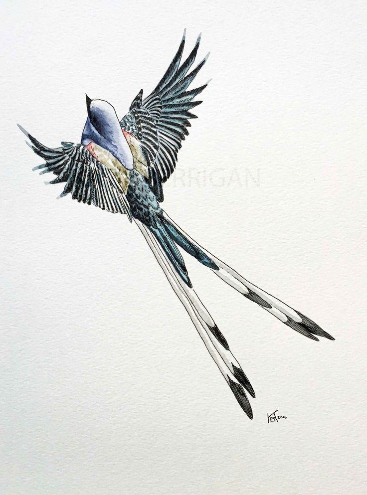 Watercolor Scissor tailed flycatcher / State bird of Oklahoma / watercolor bird painting  www.kberriganart.com
