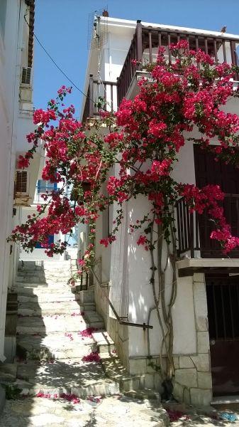 Bougainvillea in Skopelos Town