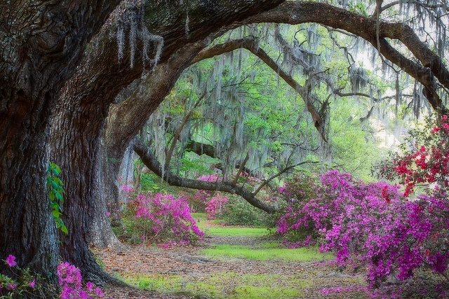 Magnolia Gardens Charleston SC --I see some great photo shoots in our future here!