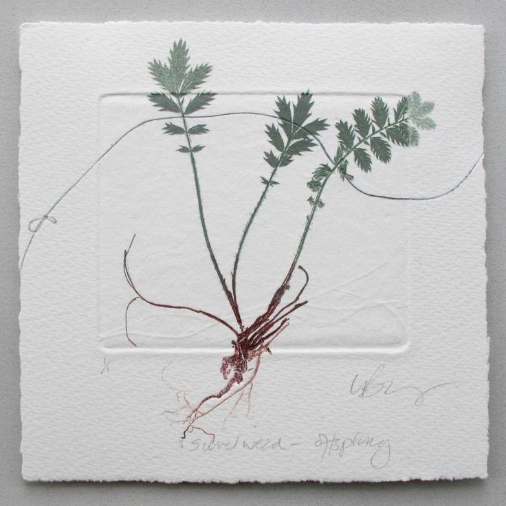 monotype-silver-weed-offspring-lynn-bailey.jpg 1,322×1,323 pixels