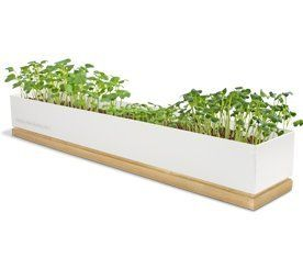 Potting Shed Creations - Micro Greens Grow Box - Spice by Potting Shed. $40.00