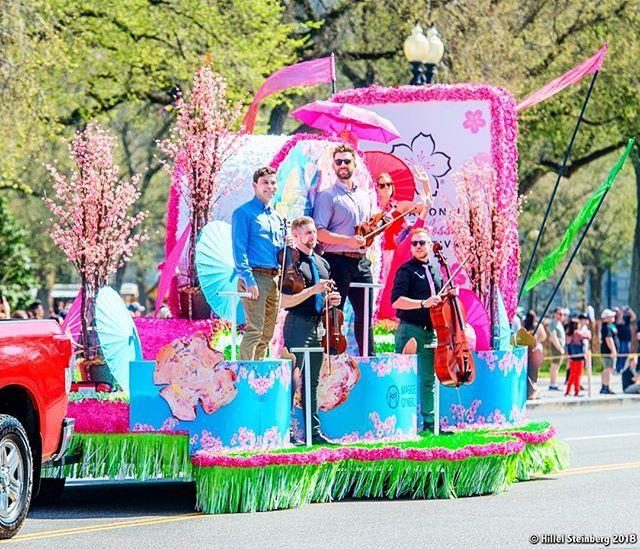 Maggie Oneil Float The Cherry Blossom Parade Maggieoneillfineart Cherryblossomparade Cherrybl Cherry Blossom Parade Cherry Blossom Festival Cherry Blossom