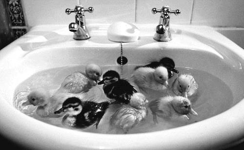 Little ducky Duddle, swimming in a puddle: Ponds, Babies, Ducklings, Baby Ducks, Babyanimal, Baby Animal, Bathroom Sinks, Things, Bath Time
