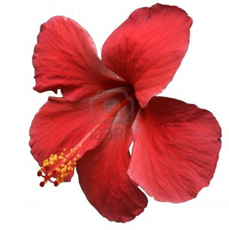 Image Result For Flower Coloring Tropical Flowers