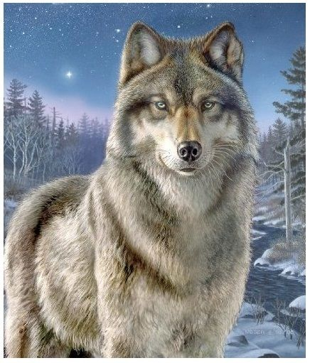 Wolves, Horses and Dogs Coloring Books & Pages / Paint by Number Kits