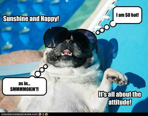 Funny Dog Pictures, Photos Images from