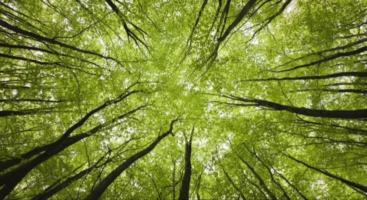 "Discover How Trees Secretly Talk to Each Other Using the ""Wood Wide Web"" – jcgregsolutions in 2020 