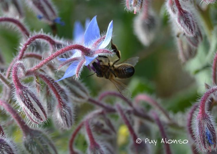 18 best biogardenity images on pinterest gardening - Illescas garden ...