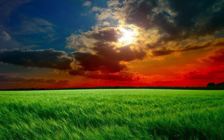 red sunset fields wallpaper in 1440x900 widescreen