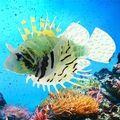 Lowest Price Silicone Artificial Silicone Plastic Fish For Aquarium Ornament Fish Tank Decoration Fake Lionfish About 12CM X 9CM