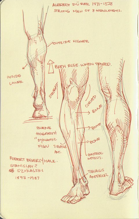 Arakaki-dessin-anatomie-humaine_8