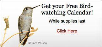 Get a Free Bird-Watching Calendar From Cornell Lab – Round Robin