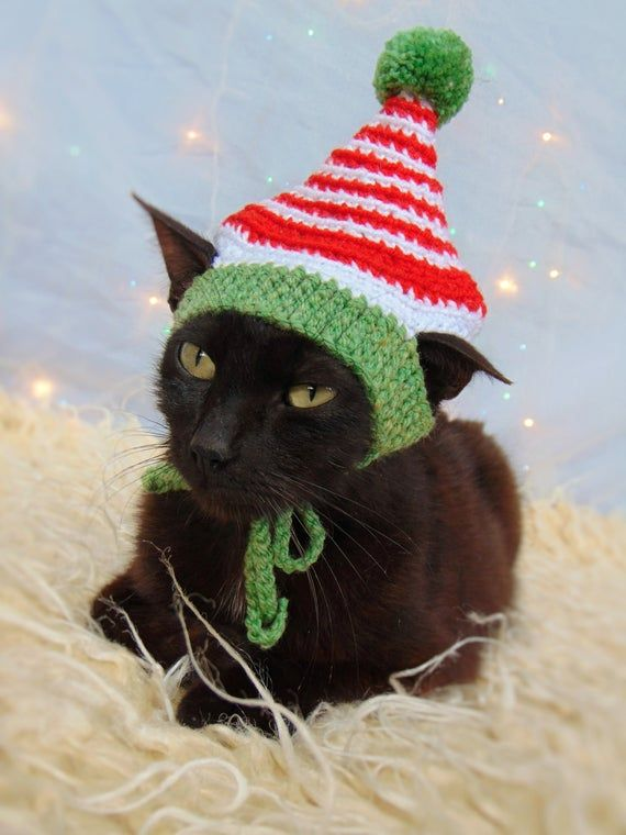 Elf Hat For Cat Christmas Pet Costume Christmas Kitten Etsy Christmas Kitten Kittens In Costumes Christmas Cats