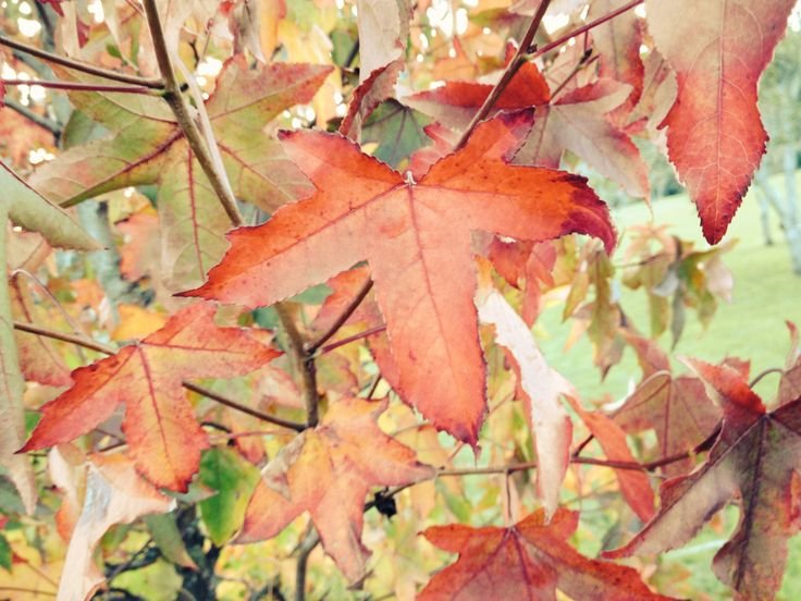 El otoño en la barquerina.