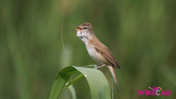 Panduan Lengkap Cara Merawat Burung Kerak Basi Burung Sikatan Tempat Makan Burung Burung Kolibri