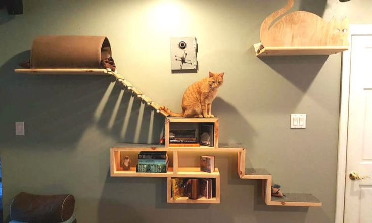 It Looks Like A Bookshelf. When I See The Rest Of The Wall? My Cat Would LOVE This!  Posted from Littlethings.com