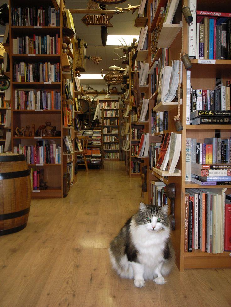 Bibliophile cat