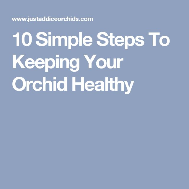 10 Simple Steps To Keeping Your Orchid Healthy