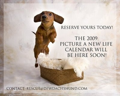 Every year the DFW Dachshund Rescue sells calendars.