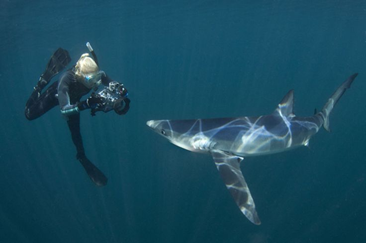 Looking for an out-of-the-ordinary shark dive? Here are five you probably…