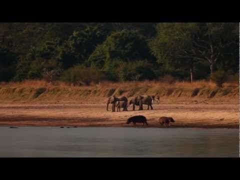 Robin Pope Safaris --Luangwa Bush Camping -- Specialist Safari -- Classic Safari Camps of Africa Member