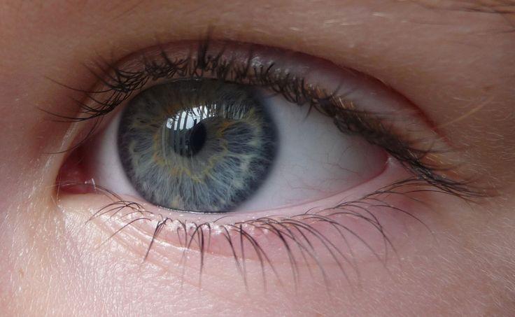 20100810_eye.jpg (1224×754)