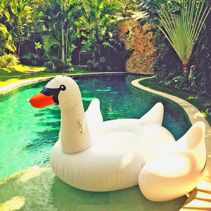 We just spotted our favorite swan by the pool. Come and play with us!  #swan #pooltoys #fun #latalianavillas #seminyak #beachside #estate