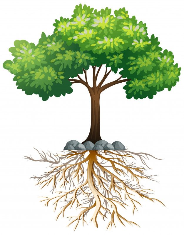 Download Big Green Tree With Roots Underground On White For Free In 2020 Green Trees Tree With Roots Drawing Cartoon Trees Pictures of trees showing roots. green tree with roots underground