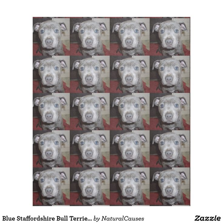 Blue Staffordshire Bull Terrier Puppy, Fleece Blanket