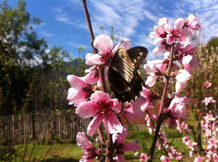 Mariposa - Butterfly en Olmué