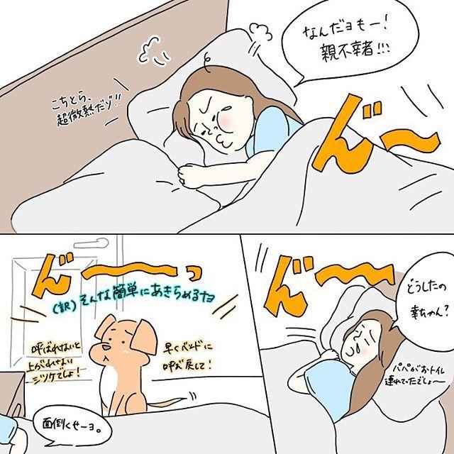 #微熱は辛し シリーズ 4話🤒 ・ この自分から降りといて、後からぶーぶーいう、うちではあるあるです。笑 ソファー、ベッドは基本的に呼ばれないと上がらないように躾けているので、こうなります😂 ・ 可愛かったので、また隣に寝かせました。笑 ・ 体調を気遣うコメント、本当にありがとうございます!! まだ鼻垂れですが← アメリカの私には効きすぎる風邪薬とビタミンCの摂取でだいぶ良くなっています! ・ まだまだ次回に続く!! ・ #絵日記#日記#イラスト#twitter#ツイッター#ワンコ#愛犬#チワワ#チワワミックス#シェルター#里親#新米飼い主#主婦#アメリカ#アメリカ生活#海外#海外生活#ほぼ日#ほぼ日もどき#イラストエッセイ#漫画エッセイ#手書きツイート#ワンコイラスト#ワンコモデル#動物イラスト#似顔絵#ペット似顔絵#犬バカ部#微熱は辛し