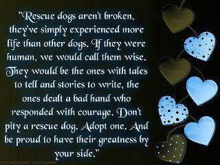 Aw, reminds me of Barkley, he was definitely a wise dog!  Anyone thinking of getting a pet for Christmas, please consider adopting or rescuing from a shelter!
