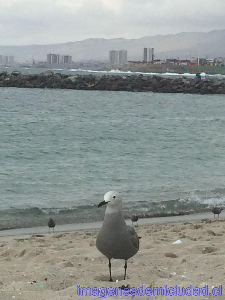 Playa Paraíso Antofagasta